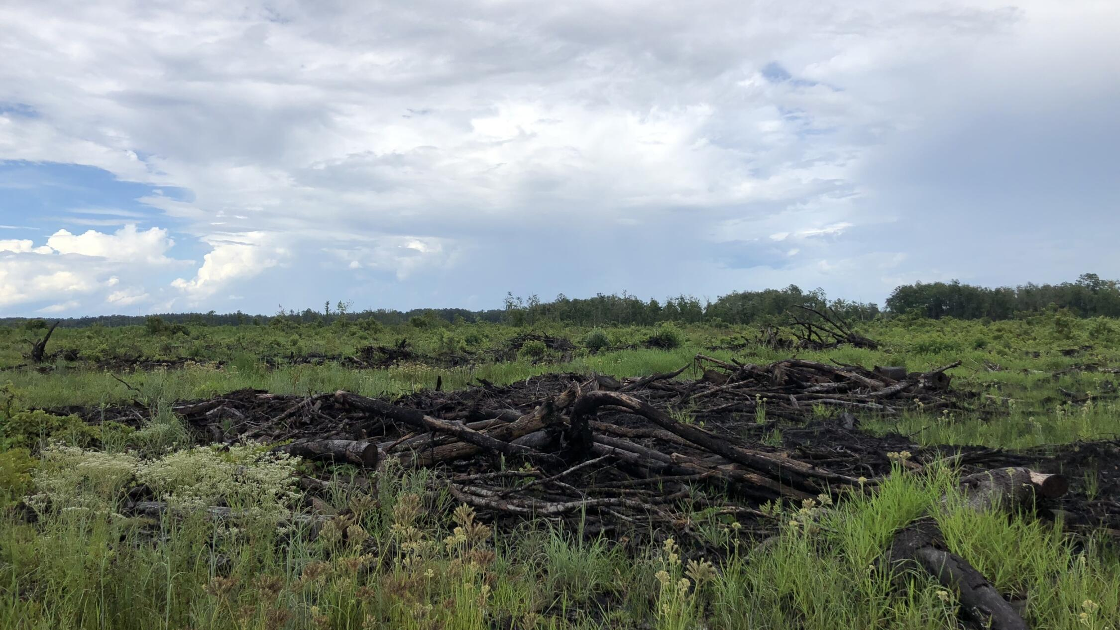 Lumber pile in grassy meadow