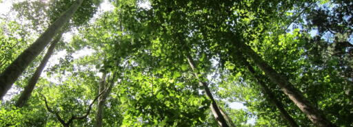 View looking upwards at inside of forest canopy