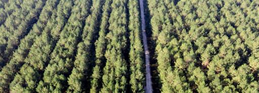Aerial of a tree farm with a road in the middle