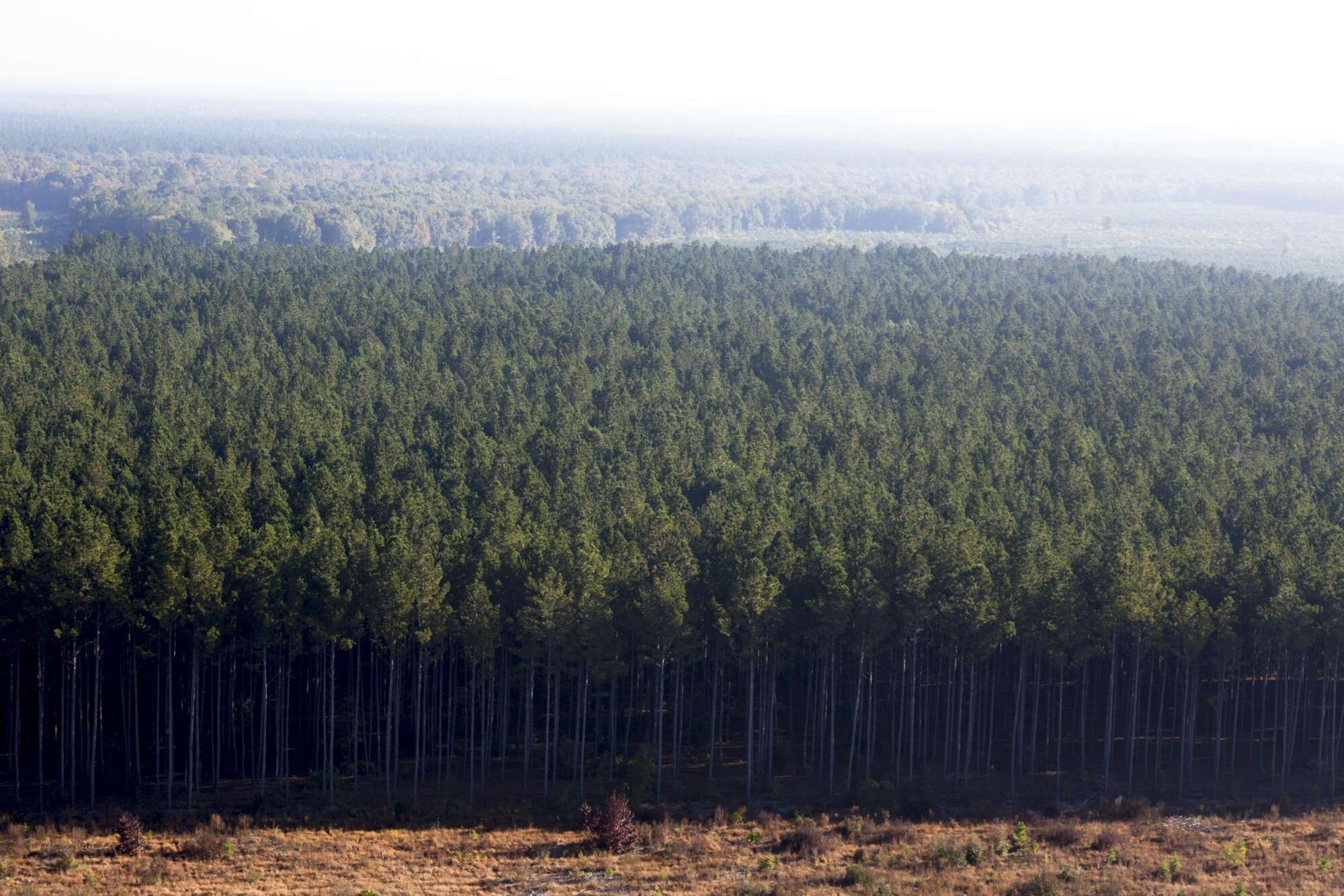 Wide shot of a tree farm