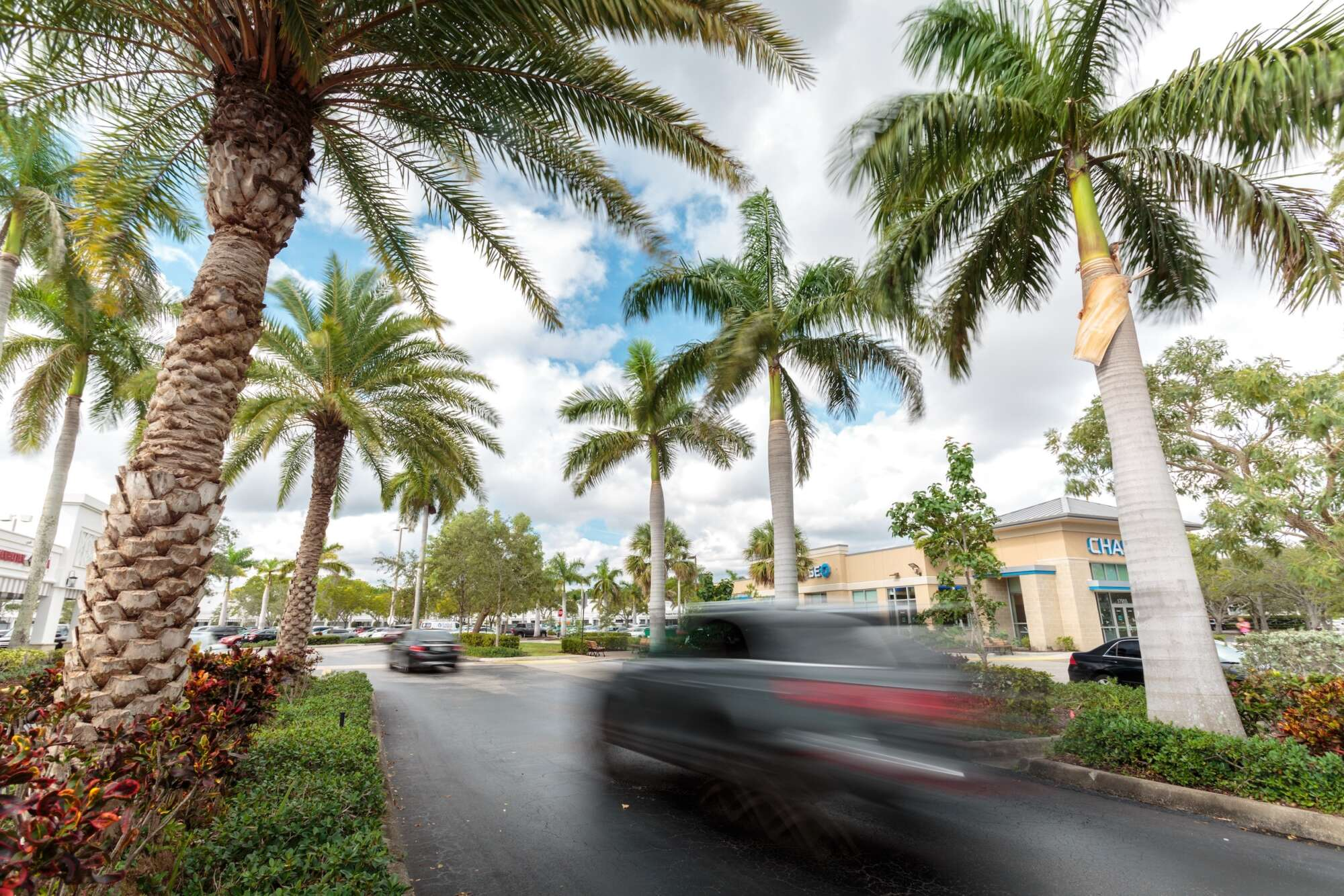 Cars enter Polo Club Shops with palm trees on both sides.