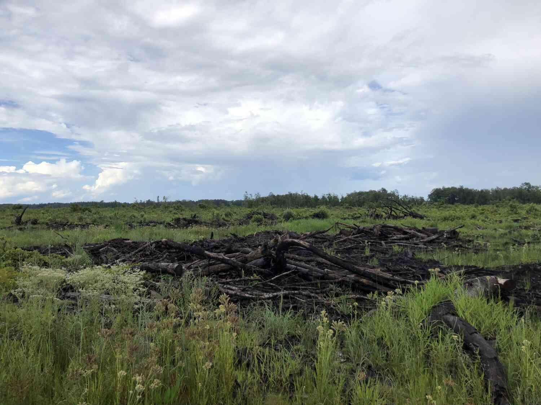 Lumber pile in grassy meadow